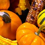 Fun Fall Activities to do with the Family