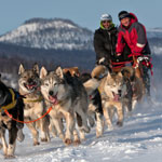 A Wild Ride: The History of Dogsledding