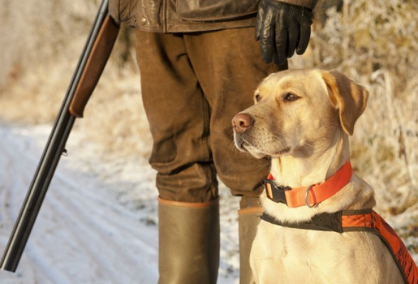 How to Find the Right Canine Companion for Hunting
